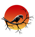 raven on a branch vector image vector image