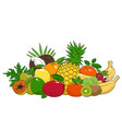 set of summer tropical fruits vector image vector image