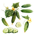 watercolor cucumber set vector image vector image