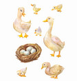watercolor set geese cute villages birds vector image vector image