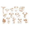 Edible mushrooms sketches for food design vector image