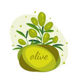 green olive branches banner design for olive oil vector image vector image