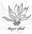 hand drawn agave plant vector image