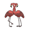 flamingo love couple hug sketch vector image