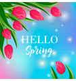 hello spring banner with blooming tulip vector image vector image
