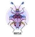 realistic hand drawing endomychidae beetle vector image