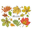 set of various beautiful colorful autumn leaves vector image