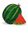 watermelon fresh and healthy fruit vector image