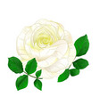 white rose simple stem with leaves vintage vector image vector image