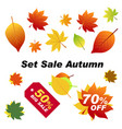 set sale autumn autumn elements for your banners vector image