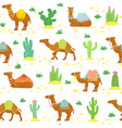 camel seamless pattern cute cartoon desert camels vector image vector image