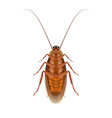 cockroaches lying on a white background vector image vector image