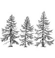 pine trees collection hand drawn christmas trees vector image vector image