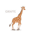 a cartoon giraffe isolated on a white background vector image