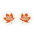 maple leaf vintage color flat vector image vector image