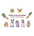 rabbits carrots and cabbage isolate objects vector image vector image
