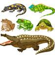set reptile animal