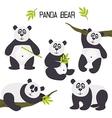 set of isolated panda bear vector image