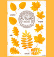set of colored autumn leaves vector image vector image