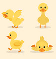 cute yellow duck collection set vector image vector image