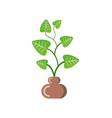 flower growing in pot from soil isolated icon vector image