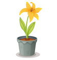 Lily Pot Plant vector image vector image