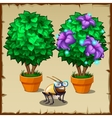 Set of two miniature potted trees and fun insect vector image vector image