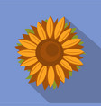 tall sunflower icon flat style vector image