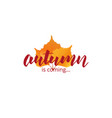 autumn is coming autumn lettering and fall leaves vector image