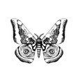 Hand drawn african emperor moth - gonimbrazia