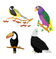 illustration of the varied birr vector image