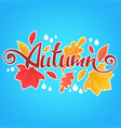 autumn bright fall leaves and lettering vector image