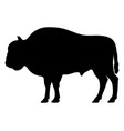 black silhouette of a bison vector image vector image
