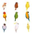 little birds set amadin sparrow canary parrot vector image