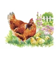Watercolor Hen and chicks in yard vector image vector image