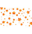 fall autumn leaves background flying maple leaves vector image