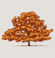 image of oak tree in autumn vector image