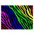 Rainbow zebra print vector image