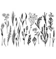 wild herbs and flowers painted are in engraving vector image