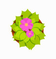 blooming flower in pot icon vector image vector image