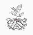 hands and plant sketch vector image vector image