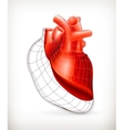 Heart structure vector image vector image
