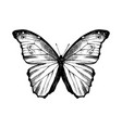 hand drawn blue morpho butterfly vector image