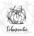 hand drawn echinocactus vector image