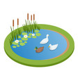 isometric lake with ducks isolated on wrhite city vector image