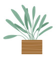 plant growing in pot or planter green indoor vector image vector image