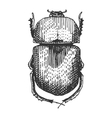 beetle insect species isolated engraved hand vector image vector image