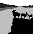 Barbary sheep vector image vector image