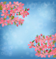 pink blossoming cherry branches with bokeh effect vector image vector image