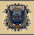 animal grey cat with frame ornaments vector image vector image